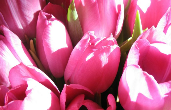 bouquet-15308_1920